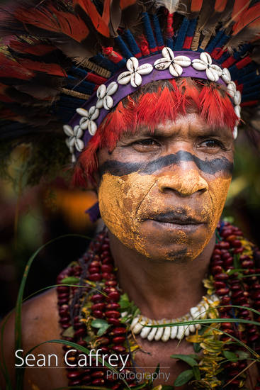 Tribal man with yellow face paint and bird of paradise feather headdress at Goroka sing-sing (Omena Singsing Group)